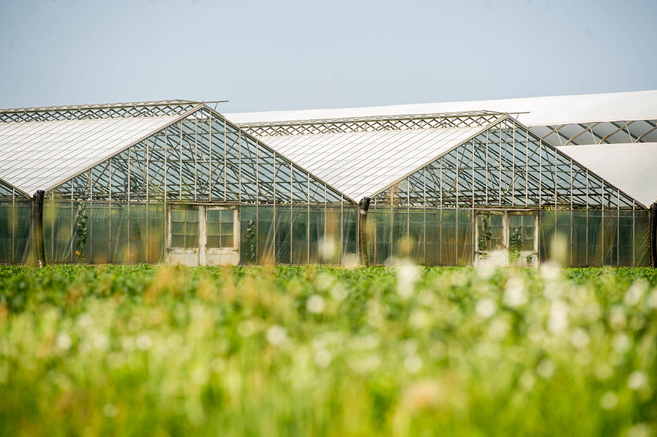 exterior view of an Ontario owned and operated greenhouse