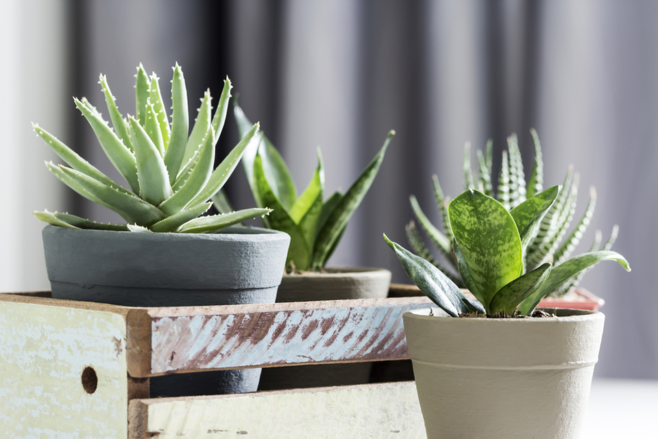 houseplants to help with managing humidity